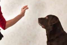Freundschaft und Partnerschaft zwischen Mann und Hund im interiour stockfoto