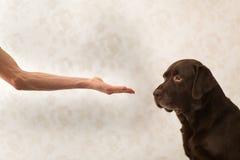 Freundschaft und Partnerschaft zwischen Mann und Hund im interiour lizenzfreie stockfotos