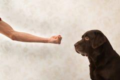 Freundschaft und Partnerschaft zwischen Mann und Hund im interiour stockbilder