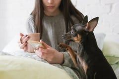 Freundschaft unter Menschen und Hund Lizenzfreie Stockfotos