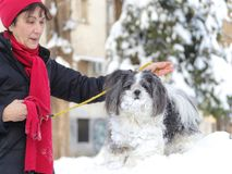 Freundschaft zwischen älterer Frau und einem shih tzu Hund im Winter stockfotografie