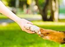 Freundschaft zwischen Menschen und Hund - Rütteln der Hand und der Tatze lizenzfreie stockfotos