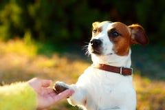 Freundschaft zwischen Menschen und Hund - Rütteln der Hand und der Tatze lizenzfreie stockfotografie