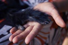 Freundschaft zwischen menschlichem Affen, Händedruck Schutz von gefährdeten Tieren lizenzfreie stockfotos