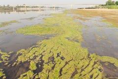 Freundschafts-Brücke thailändisch - Laos 1. und Algen Stockbilder