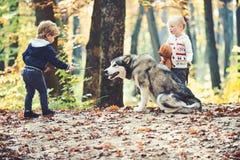 Freundtrainingshund in den Herbstwaldfreunden, in der Freundschaft und in der Kinderliebe lizenzfreie stockbilder