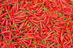 frewsh hot peppers Stock Images
