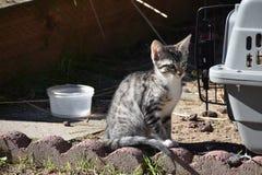 Freya小猫在她的热切地等候她的下次冒险的宠物载体旁边摆在 库存图片