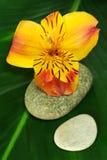 frezi liść kamienie Zdjęcie Royalty Free