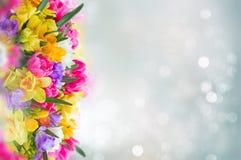 Frezja i daffodil kwiatów granica Fotografia Stock