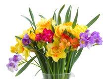 Frezja i daffodil kwiatów zamknięty up Zdjęcie Stock