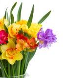 Frezja i daffodil kwiatów zamknięty up Obrazy Stock