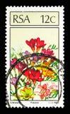 Frezja, rośliny seria około 1985, Zdjęcie Royalty Free