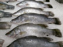 Frezze fish. Frezze fish on ice royalty free stock photos
