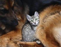 Förfölja och en katt. Fotografering för Bildbyråer