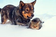Förfölja och katten i snow Royaltyfri Bild