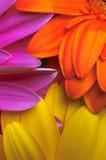 färger Royaltyfri Foto
