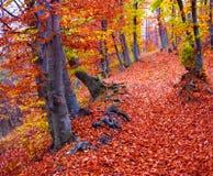 färgfallskog Arkivfoton