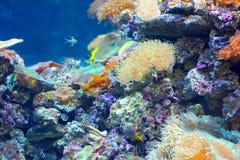 färgglad korallrev Royaltyfri Fotografi