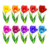 färgrik blomma för bakgrund också vektor för coreldrawillustration Arkivbild