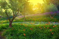 färgrik blommapark Royaltyfri Fotografi