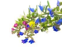Färgrik bukett av lösa blommor Royaltyfri Fotografi