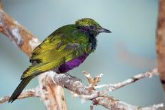 färgrik fågel Arkivbild