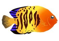 färgrik fisk Fotografering för Bildbyråer