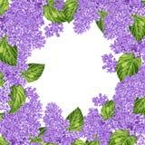 Färgrik hand dragen blom- bakgrund med lilan Royaltyfria Foton