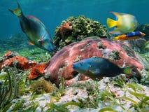 Färgrik korallrev med den tropiska fisken Royaltyfri Fotografi
