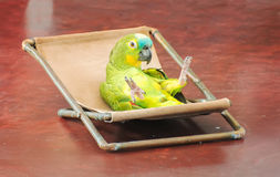 Färgrik papegoja Arkivbild
