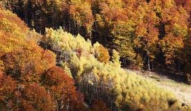 Färgrik varm höst i rumänska berg Fotografering för Bildbyråer