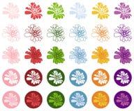 Färgrik vektorsymbol för Zinnia Royaltyfri Foto