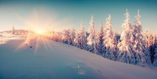 Färgrik vintersoluppgång i bergskogen Arkivbilder
