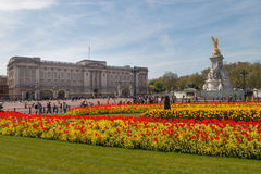 Färgrika blommor framme av Buckingham Palace Arkivbilder