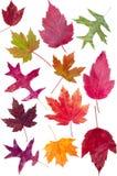 färgrika fallleaves för sortiment Arkivbilder