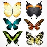 färgrika fjärilar Arkivfoto
