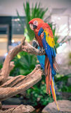 Färgrika härliga papegojor Royaltyfria Foton