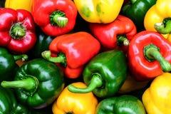 Färgrika söta spanska peppar Fotografering för Bildbyråer