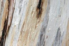 Färgrikt texturerat trädskäll Arkivbild
