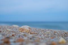 Färgrikt vaggar, och krossade skal tvättar sig upp på en Jersey strand på D Arkivbilder