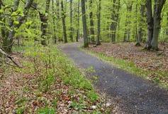 Früher Frühling im Wald Lizenzfreie Stockbilder