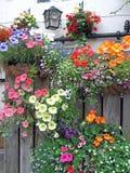 Frühjahr-Blumen-Körbe auf hölzernem Zaun Stockfoto