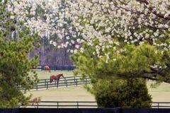 Frühjahr an der Pferden-Ranch Stockfotos