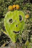 Fröhlicher Kaktus Lizenzfreies Stockfoto