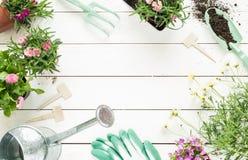 Frühling - Gartenarbeitwerkzeuge und -blumen in den Töpfen auf weißem Holz Lizenzfreie Stockfotografie