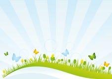 Frühlings-Feld Stockbild