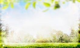 Frühlings- oder Sommernaturhintergrund mit Laub Stockfotografie