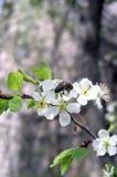 Frühlings-Szene Lizenzfreie Stockbilder