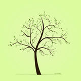 Frühlingsbaum mit Blättern Stockfotografie